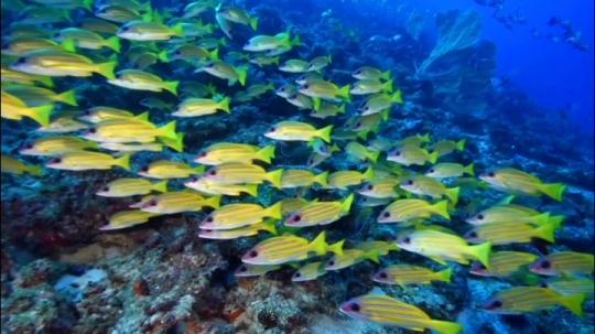 Passe bateaux - Bancs de poissons