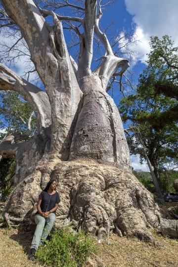 Baobab - Musical plage