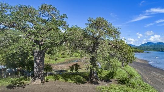 Baobabs de Moutsamoudou