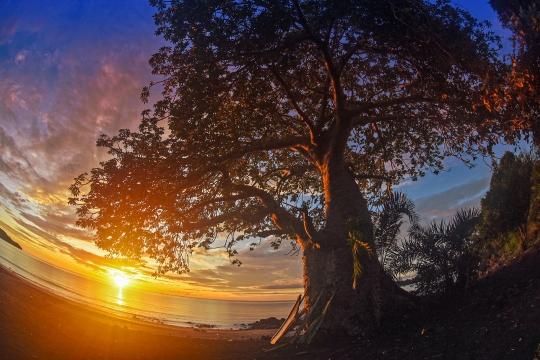 Coucher de soleil et baobab