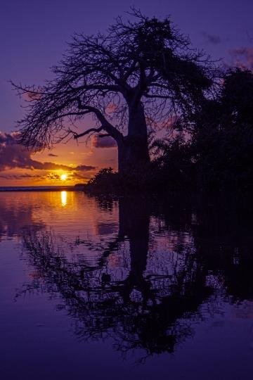Coucher de soleil sur baobab