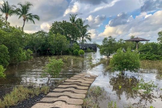 GLB 360 Grande marée mangrove innondée