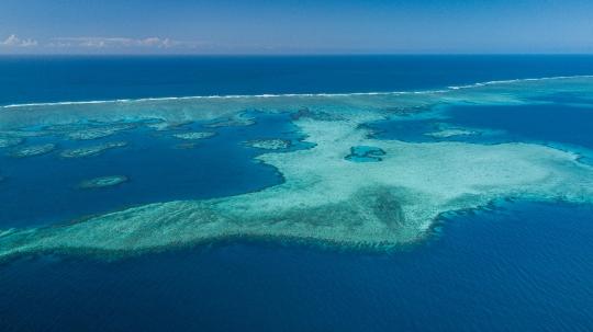 GLB 459 Récif coralien