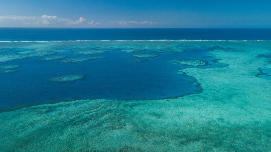 GLB 460 Récif coralien