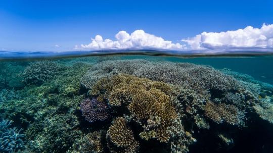 GLB0232 Récif coralien-2