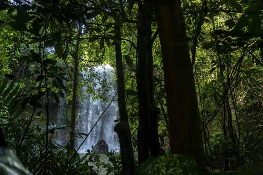 GLB0588 - Végétation luxuriante et cascade