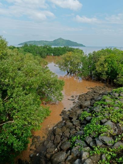Mangrove boueuse