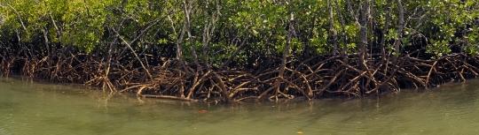 Mangrove de Dzoumogne - Panoramique