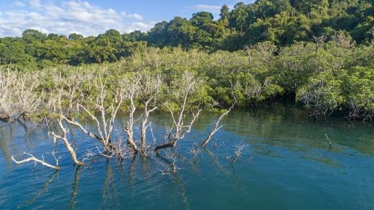 Mangrove de M\'Zouazia vue de drone