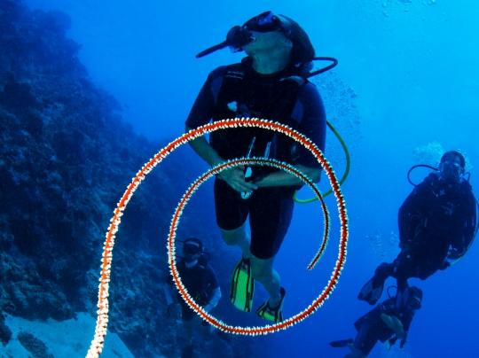 MARCspirale plongeurs