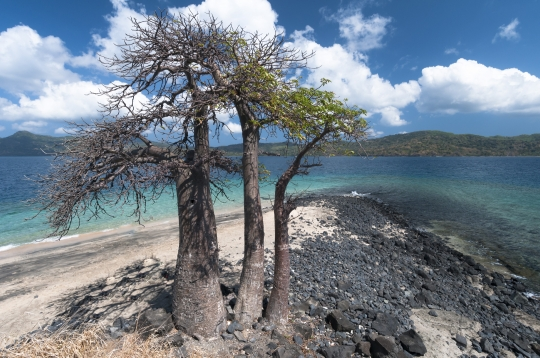 NH-Mayotte-20100905-6479