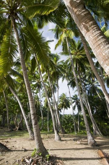 NH-Mayotte-20120427-0681