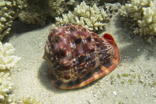 NH-Mayotte-20120811-3380