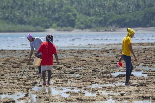 Pêche au poulpe sur le platier de M\'Bouanatsa pendant la marée basse