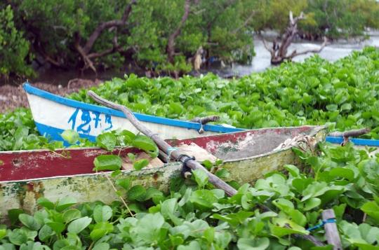 Pirogue et mangrove