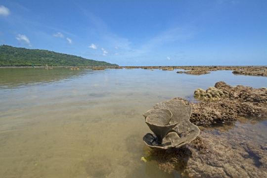 Platier découvert  par marée basse à M\'Bouanatsa